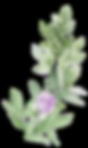 greenery spray lavender_edited.png
