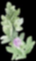 greenery spray lavender.png