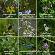Biodiversity Week 2021