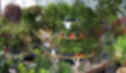 House plant turntable.jpg
