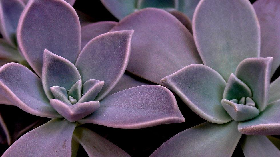 succulent-3472094_1920.jpg
