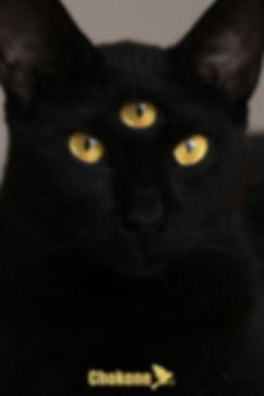 gato tres ojos vertical.jpg
