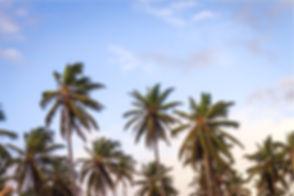 Palm Trees_edited.jpg