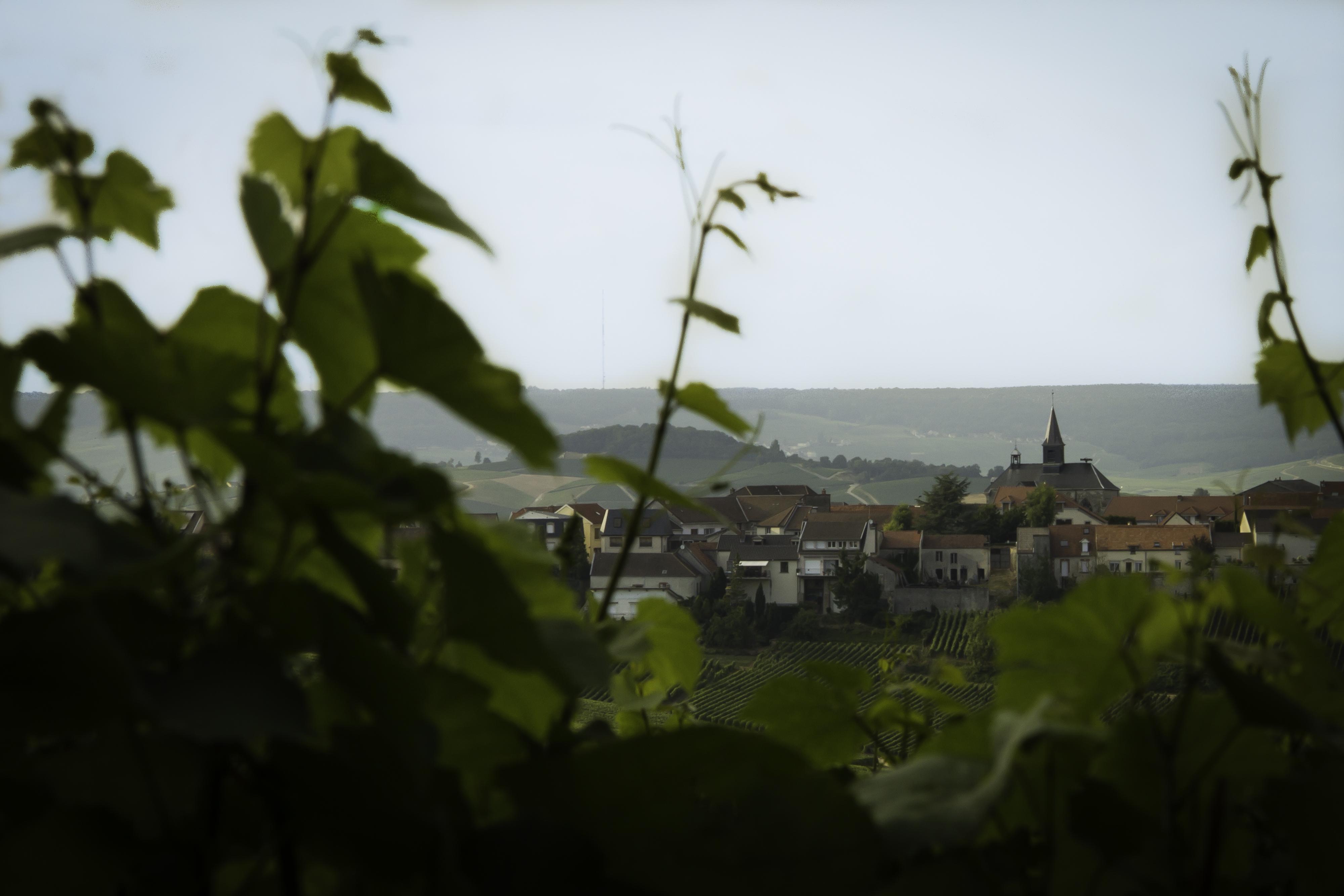 Cramant au coeur des vignes