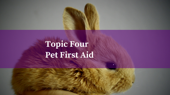 Topic Four: Pet First Aid Pt 1