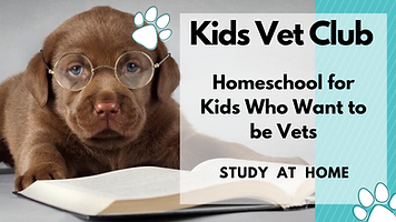 Kids Vet Club Homeschool for kids who wa