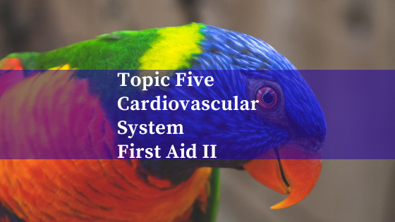 Topic Five: Cardiovascular System; First Aid Pt 2