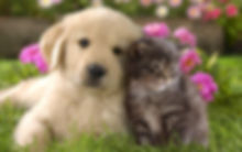 free-pics-of-cats-and-dogs-wallpaper.jpg