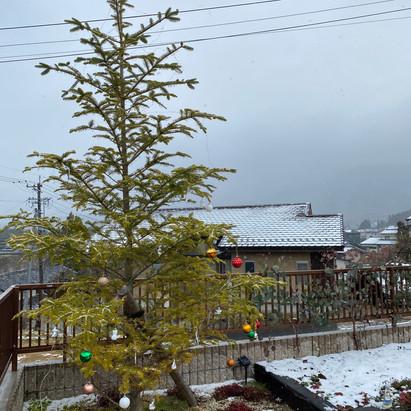 園庭のモミの木☃