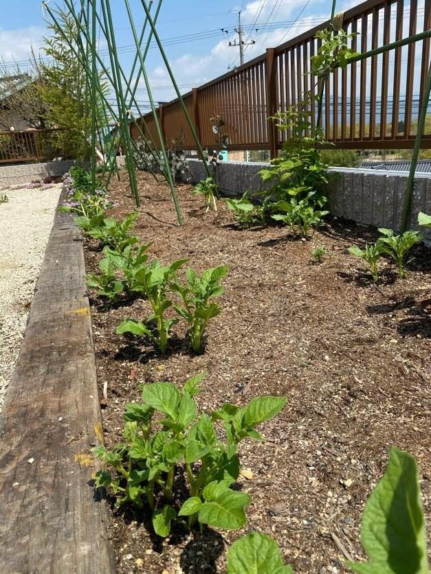 園庭の整備🌷パート②