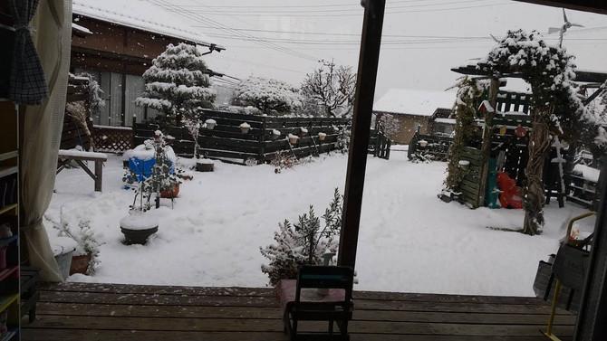 雪やこんこ⛇