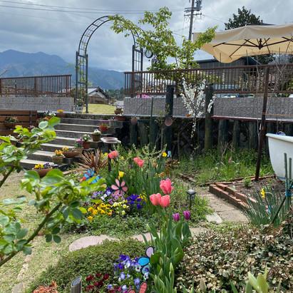 園庭が彩とりどり賑やかです🌷
