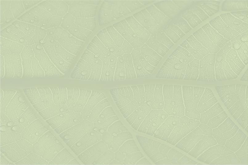 Olive Leaf background.png