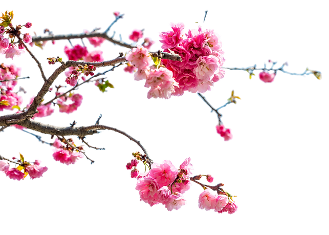 Blossom%20(1)_edited.png