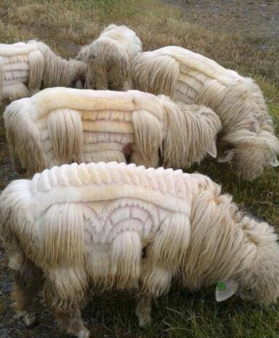 Sheep Art!?!  I hope they're Merino!
