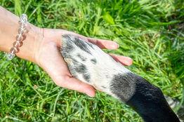 Hund-Mensch-Beziehung_Schafer Béatrice