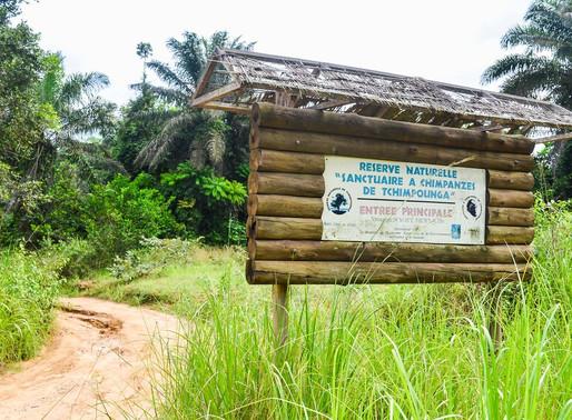 Tres sitios de esperanza para chimpancés en África