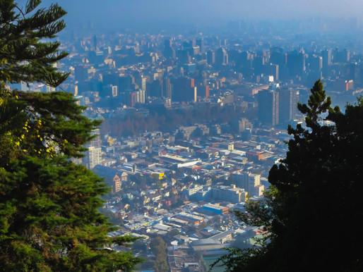 Árboles urbanos, fundamentales para ciudades más sustentables