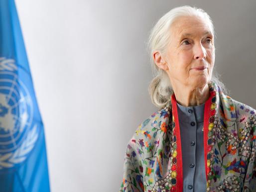 Jane Goodall: sembrando esperanza y paz en el mundo