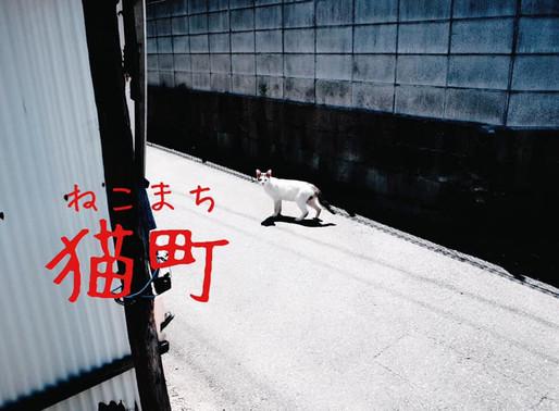 企画展「猫町」に出展します