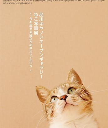 品川キヤノンオープンギャラリー ねこ写真展