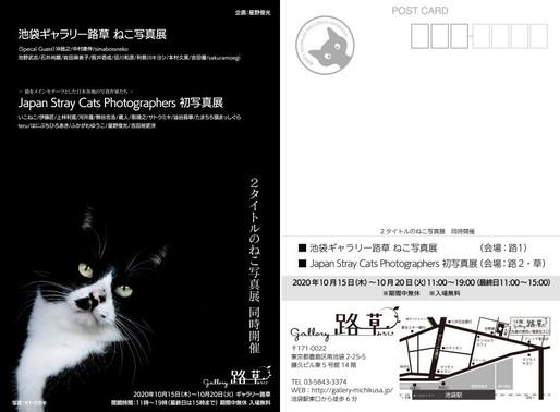 「Japan Stary Cat Photographers」初グループ写真展に出品します。