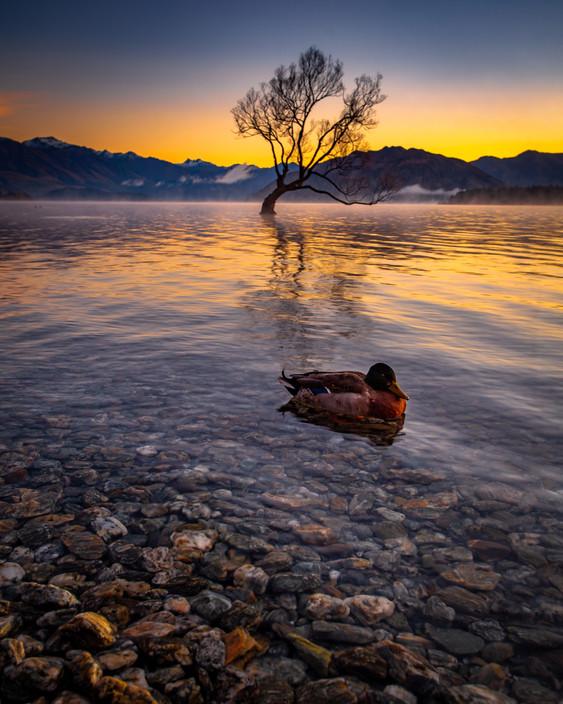 Silence of a New Dawn