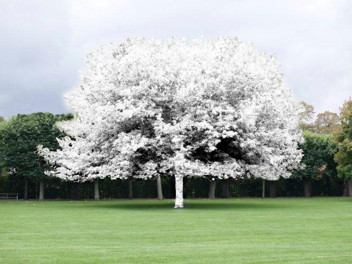 """Chalk Tree"". 2011"