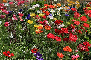 צמחים בתמונות