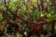 מאה עצים נבחרים בתמונות