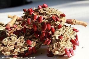 זרעים