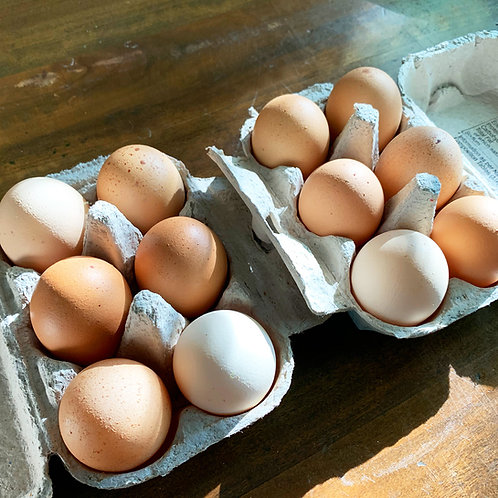 Free Range Eggs - Dozen