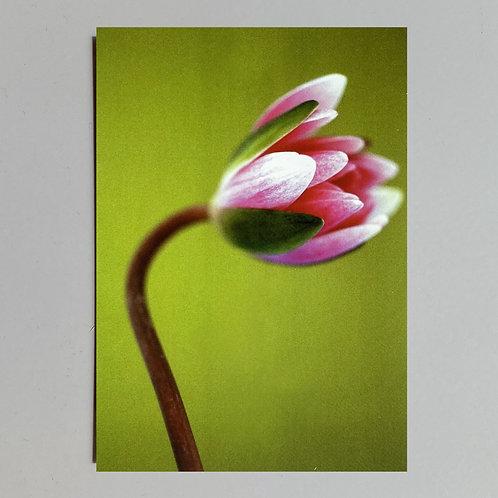 """Carte de voeux """"Fleur sur fond vert"""""""