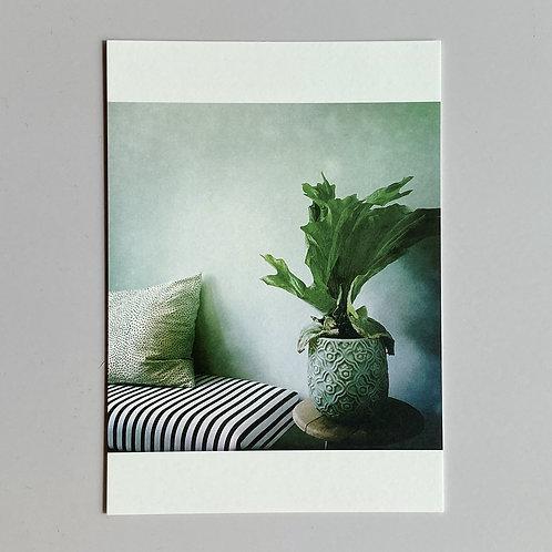 """Carte de voeux """"Photo plante en pot"""""""