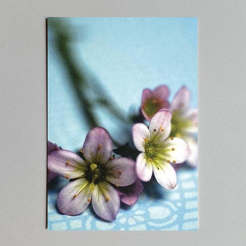 """Carte de voeux """"Fleurs sur fond bleu"""""""