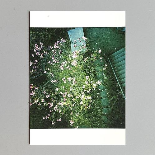 """Carte de voeux """"Buisson fleurs"""""""