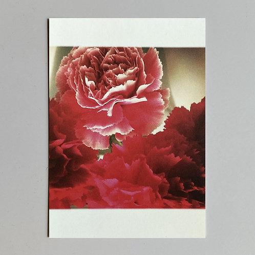 """Carte de voeux """"Fleurs roses"""""""