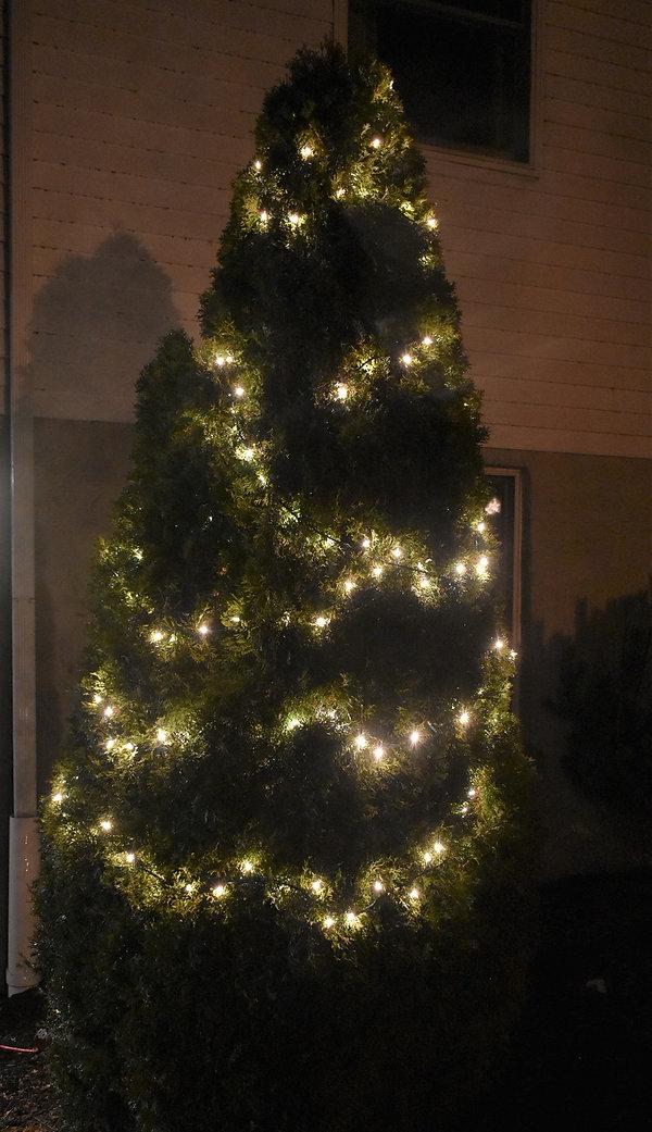12-Eve tree.jpg