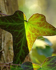 Two-Leaves-in-the-Sun-e1572807500705.jpg