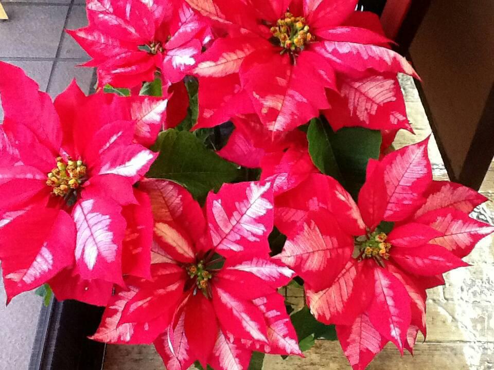 お花のphoto