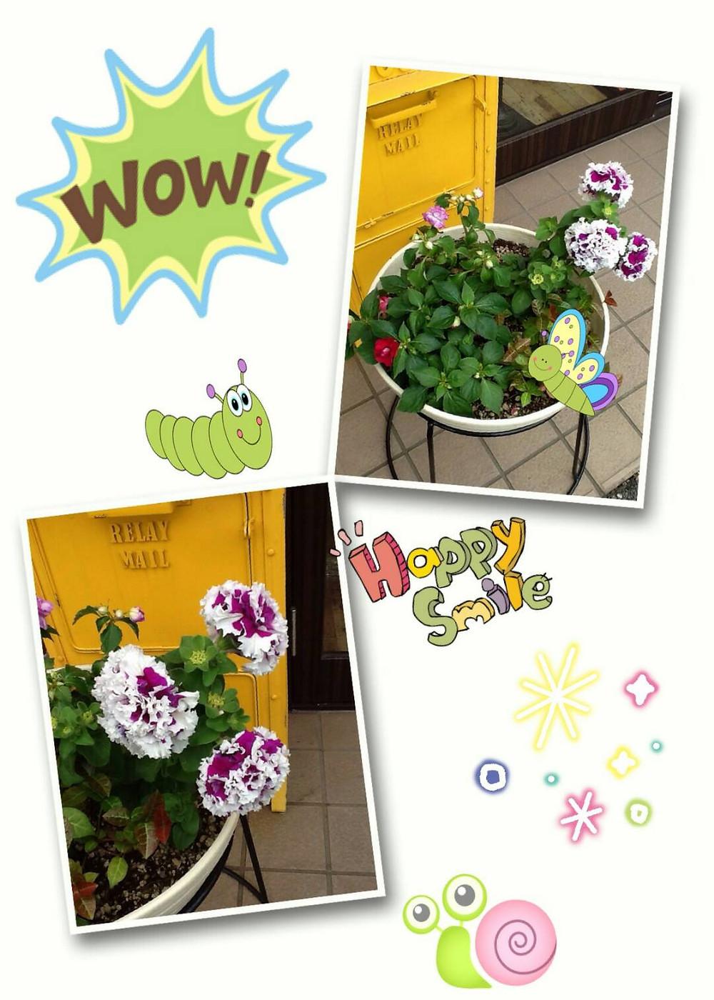 フルアヘッドのお花たち