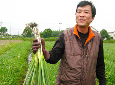 Meet the Farmer Series 3 - The Shanxing Scallion of Mr Shen