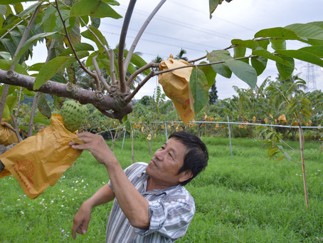 Meet the Farmer Series 1 - The Orchards of Wu Jing Ming