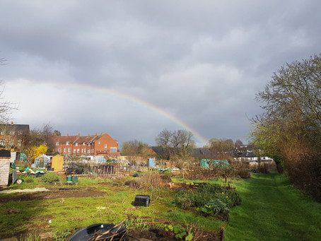 Plot Life: Love the allotments? Tell us about it!