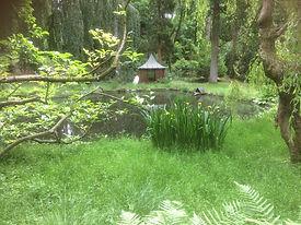 lower pond.jpg