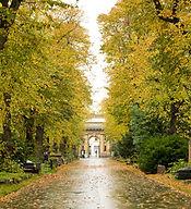 2_Autumn leaves in Brompton Cemetery.jpg