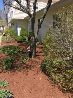 Planted and mulched in East Lyme, CT