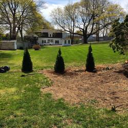 Planting Arborvitaes New London, CT