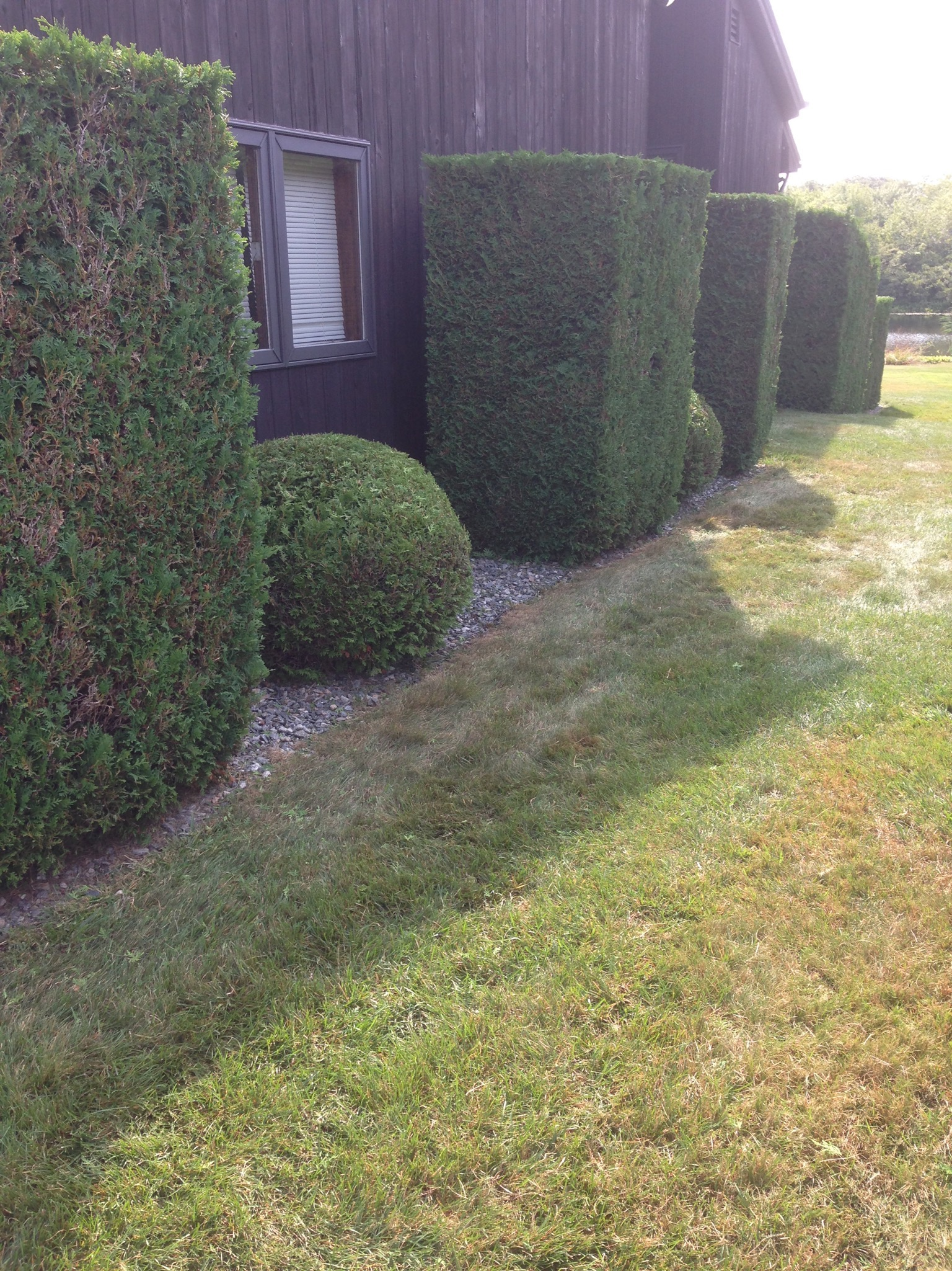 Trimming Hedges in Waterford, CT