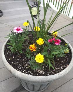 Flower pot planting in East Lyme, CT